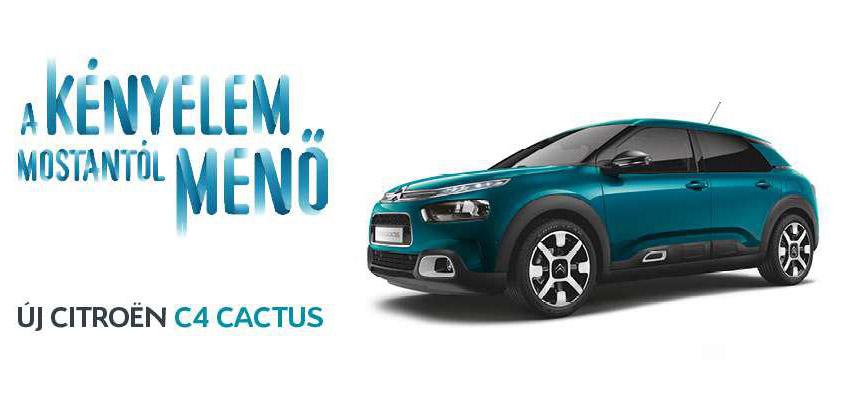 UJ_C4_Cactus.281541.70